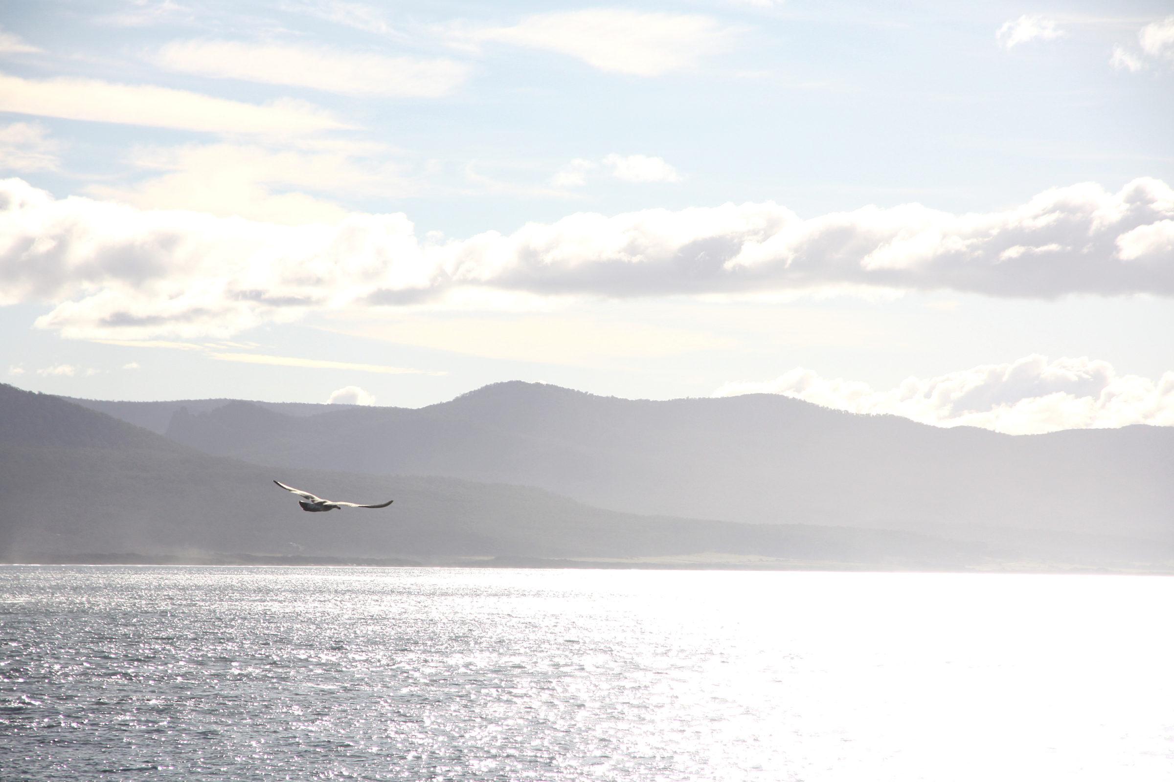 Tasmania Road Trip Itinerary, Day 10: Goodbye Tasmania