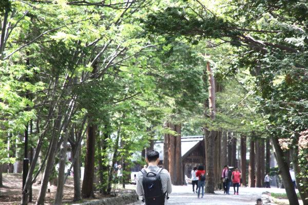 Maruyama 39 / Sapporo