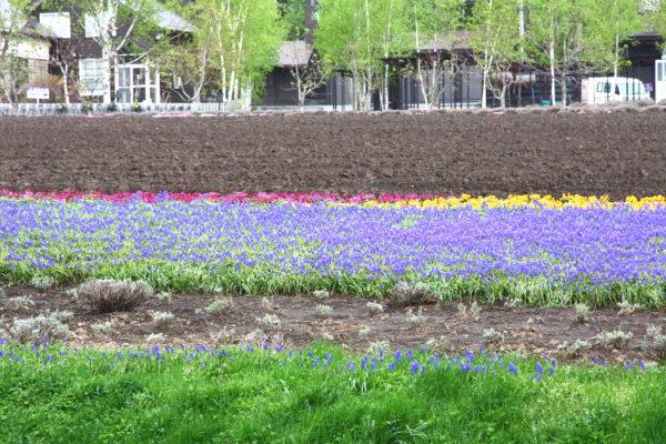 Farm Tomita 15 / Furano