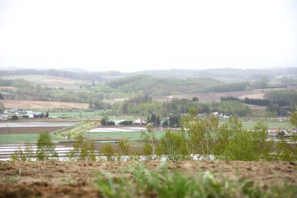 Farm Tomita 21 / Furano