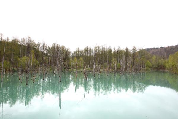 Aoiike Blue Pond 14 / Furano