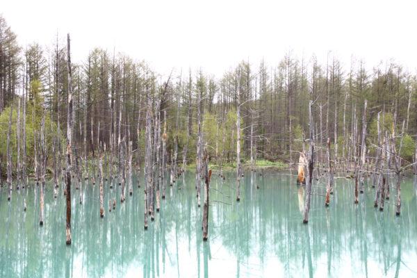 Aoiike Blue Pond 17 / Furano