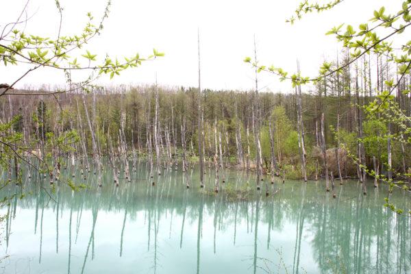 Aoiike Blue Pond 2 / Furano