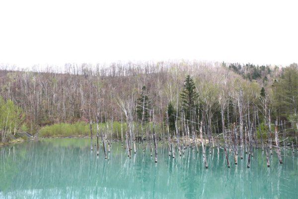 Aoiike Blue Pond 7 / Furano
