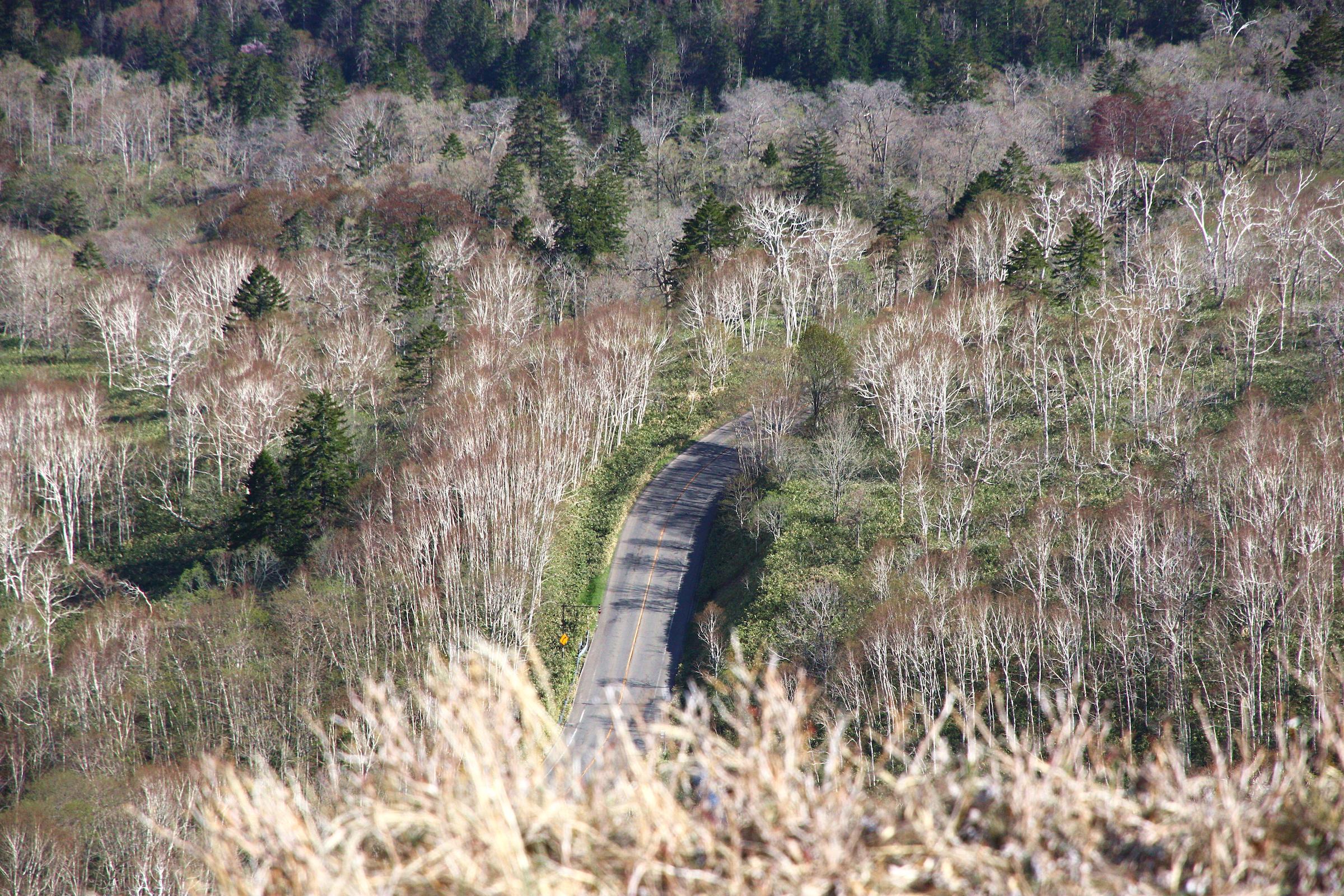 Hokkaido Road Trip Itinerary, Day 10: Goodbye Hokkaido; Hello Tokyo!