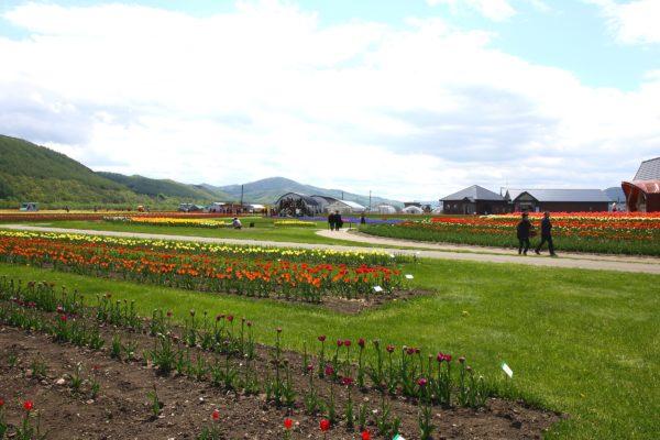 Kamiyubetsu Tulip Park 4 / Yubetsu