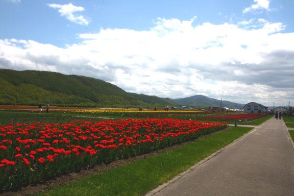 Kamiyubetsu Tulip Park 5 / Yubetsu