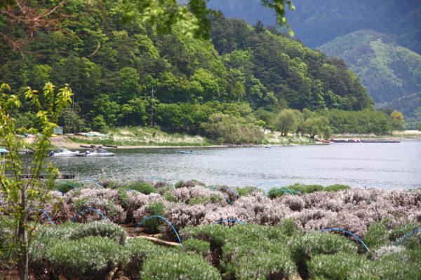 Natural Living Centre Fuji 15