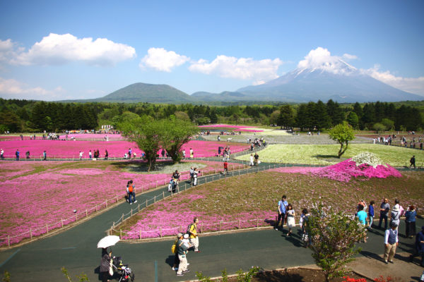 Shibazakura Festival Fuji 34