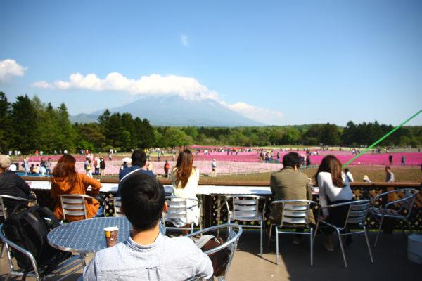 Shibazakura Festival Fuji 41
