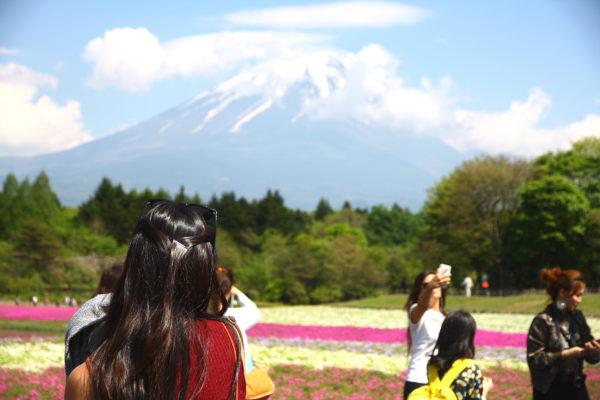 Shibazakura Festival Fuji 9