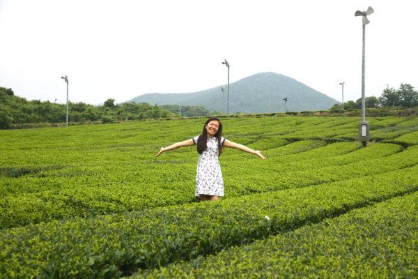 O'Sulloc Tea Museum 21 / Jeju
